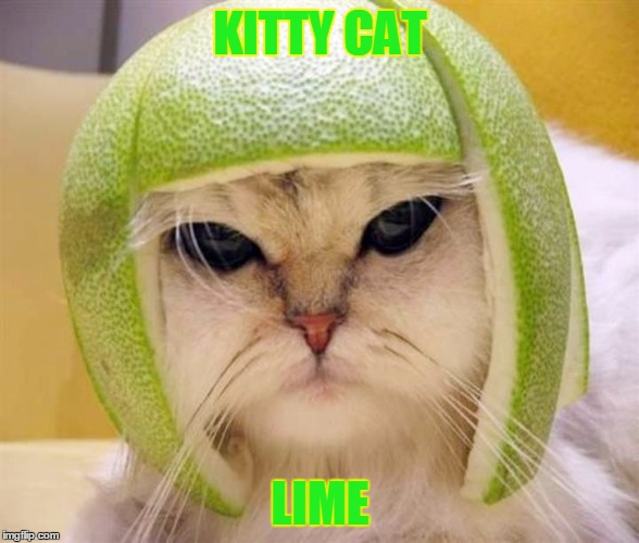 KITTY CAT LIME | made w/ Imgflip meme maker