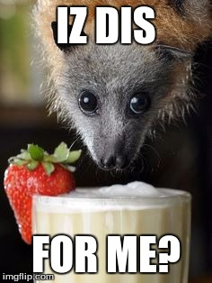 Is this adorable or what? |  IZ DIS; FOR ME? | image tagged in cute,bat | made w/ Imgflip meme maker