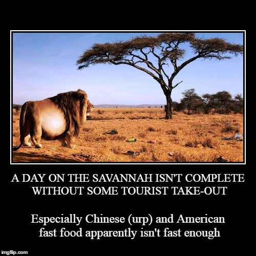 Mexican just gives me heartburn | A DAY ON THE SAVANNAH ISN'T COMPLETE WITHOUT SOME TOURIST TAKE-OUT | Especially Chinese (urp) and American fast food apparently isn't fast e | image tagged in funny,demotivationals,lion,africa,tourism | made w/ Imgflip demotivational maker