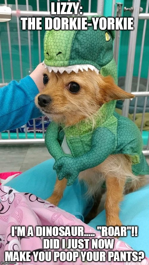 "Lizzy"" The Dorkie-Yorkie 