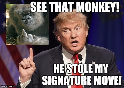 Image of: See That Monkey He Stole My Signature Move Image Tagged In Funny Meme Imgflip Image Tagged In Funny Memedonald Trump Imgflip