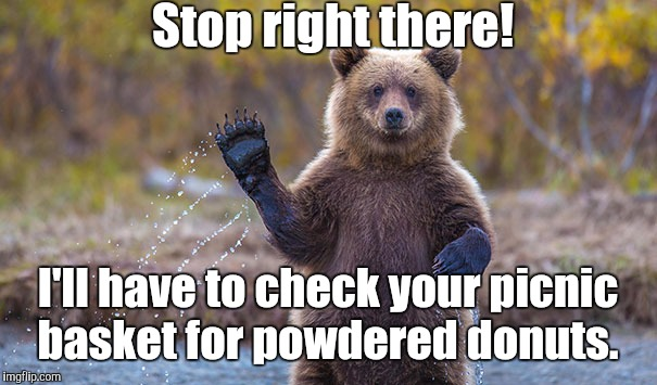 Funny Bear | Stop right there! I'll have to check your picnic basket for powdered donuts. | image tagged in funny bear | made w/ Imgflip meme maker