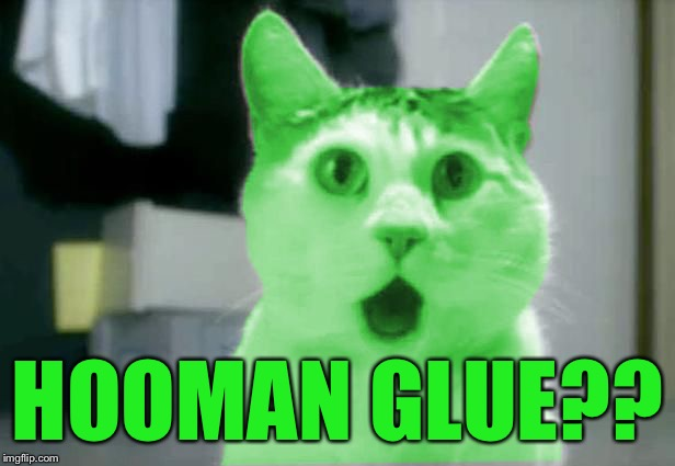 OMG RayCat | HOOMAN GLUE?? | image tagged in omg raycat | made w/ Imgflip meme maker