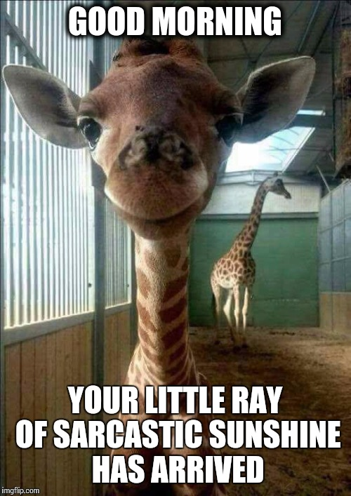 Good morning |  GOOD MORNING; YOUR LITTLE RAY OF SARCASTIC SUNSHINE HAS ARRIVED | image tagged in memes,april the giraffe,sarcastic,good morning | made w/ Imgflip meme maker