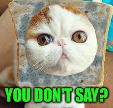 Moldy Bread Cat | YOU DON'T SAY? | image tagged in moldy bread cat | made w/ Imgflip meme maker