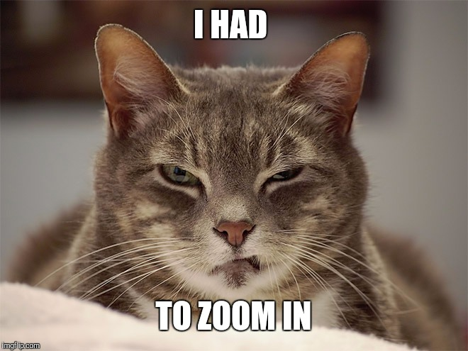 Sarcasm Cat | I HAD TO ZOOM IN | image tagged in sarcasm cat | made w/ Imgflip meme maker