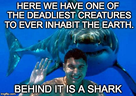 Sharks created the 'week' theme. | HERE WE HAVE ONE OF THE DEADLIEST CREATURES TO EVER INHABIT THE EARTH. BEHIND IT IS A SHARK | image tagged in shark,shark week,bacon,human | made w/ Imgflip meme maker