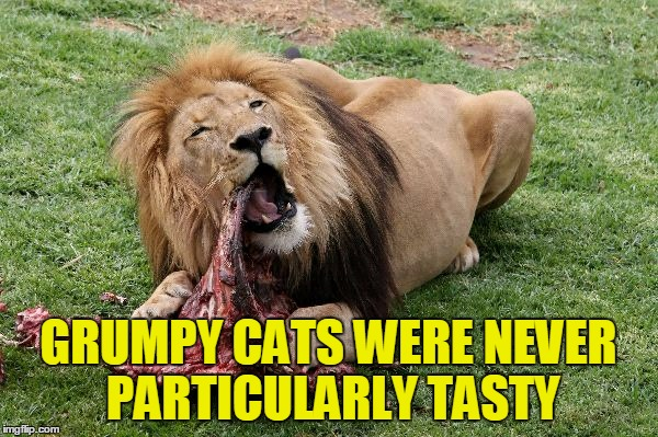 GRUMPY CATS WERE NEVER PARTICULARLY TASTY | made w/ Imgflip meme maker