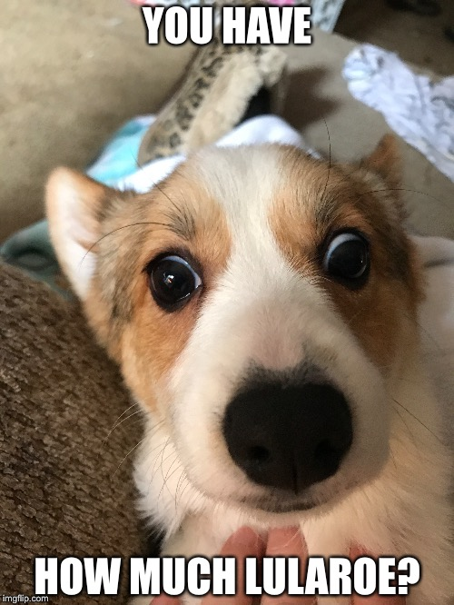 YOU HAVE HOW MUCH LULAROE? | image tagged in pembroke welsh corgi | made w/ Imgflip meme maker