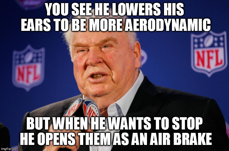 Madden Mike | YOU SEE HE LOWERS HIS EARS TO BE MORE AERODYNAMIC BUT WHEN HE WANTS TO STOP HE OPENS THEM AS AN AIR BRAKE | image tagged in madden mike | made w/ Imgflip meme maker
