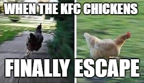 running chicken | WHEN THE KFC CHICKENS FINALLY ESCAPE | image tagged in running chicken | made w/ Imgflip meme maker