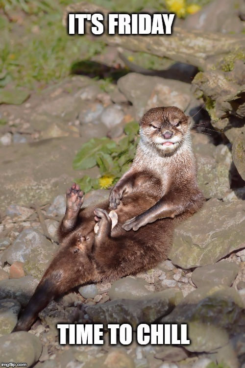 Chill Time | image tagged in friday,otter,funny animal,chill,relax | made w/ Imgflip meme maker