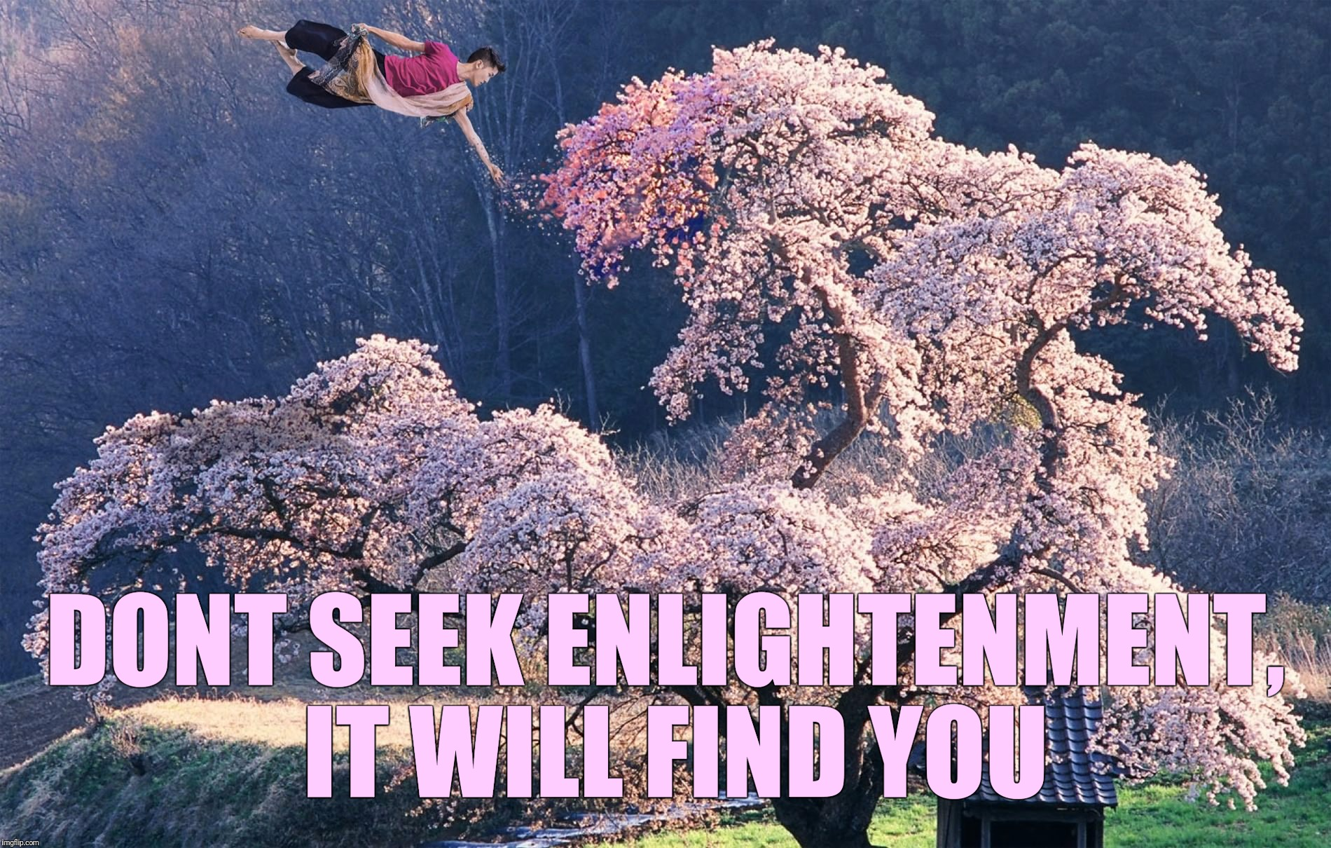 DONT SEEK ENLIGHTENMENT, IT WILL FIND YOU | made w/ Imgflip meme maker