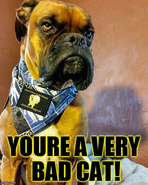 Grumpy Dog | YOURE A VERY BAD CAT! | image tagged in grumpy dog | made w/ Imgflip meme maker