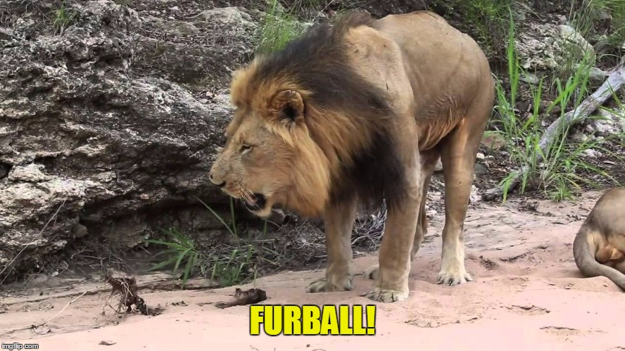 FURBALL! | made w/ Imgflip meme maker