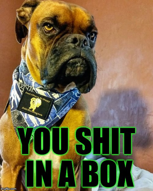 Grumpy Dog | YOU SHIT IN A BOX | image tagged in grumpy dog | made w/ Imgflip meme maker