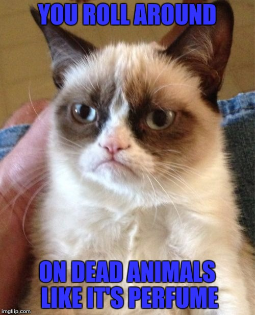 Grumpy Cat Meme | YOU ROLL AROUND ON DEAD ANIMALS LIKE IT'S PERFUME | image tagged in memes,grumpy cat | made w/ Imgflip meme maker