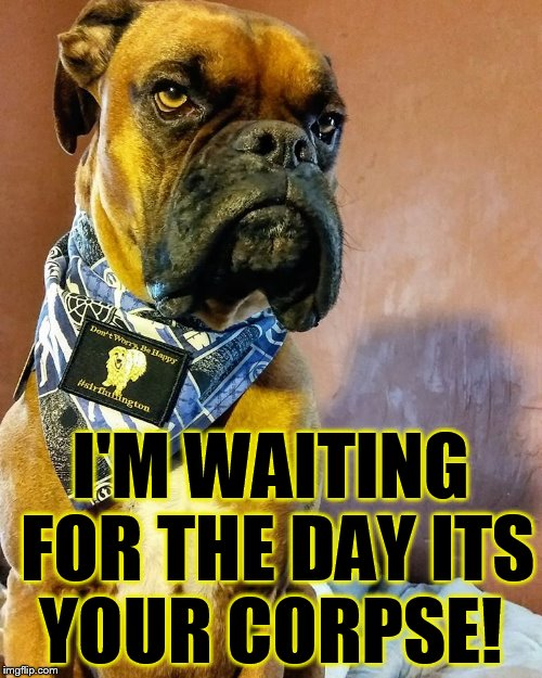 Grumpy Dog | I'M WAITING FOR THE DAY ITS YOUR CORPSE! | image tagged in grumpy dog | made w/ Imgflip meme maker