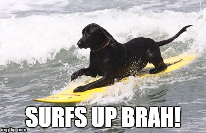 surfs up | SURFS UP BRAH! | image tagged in surfs up | made w/ Imgflip meme maker