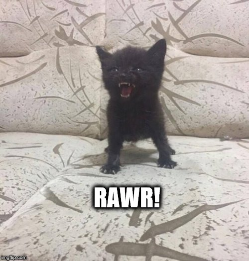 Rawr! |  RAWR! | image tagged in cat meme | made w/ Imgflip meme maker