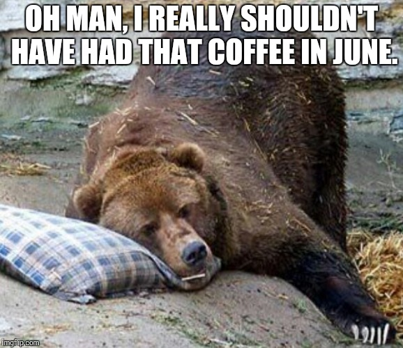 Sleepless Bear | OH MAN, I REALLY SHOULDN'T HAVE HAD THAT COFFEE IN JUNE. | image tagged in sleep,bear,funny,memes | made w/ Imgflip meme maker