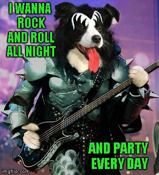 Hope I got that song stuck in your head!!! Rock Week...A pinheadpokemanz Event | I WANNA ROCK AND ROLL ALL NIGHT AND PARTY EVERY DAY | image tagged in rock week,memes,rock,funny,dogs,animals | made w/ Imgflip meme maker