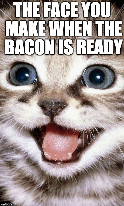 BACON!!! | THE FACE YOU MAKE WHEN THE BACON IS READY | image tagged in bacon week is coming,cat,cute,bacon | made w/ Imgflip meme maker