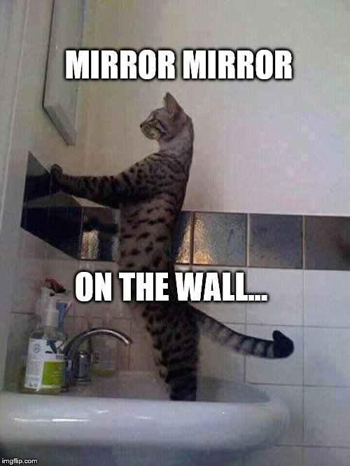 Mirror Mirror | MIRROR MIRROR ON THE WALL... | image tagged in cat meme | made w/ Imgflip meme maker