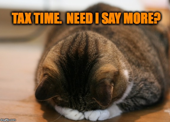 Should Send The Government My Kitty Litter Instead Because That's All The Bastards Are Worth To Me. | TAX TIME.  NEED I SAY MORE? | image tagged in kittycat facepalm | made w/ Imgflip meme maker