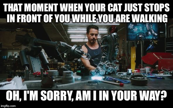 THAT MOMENT WHEN YOUR CAT JUST STOPS IN FRONT OF YOU WHILE YOU ARE WALKING OH, I'M SORRY, AM I IN YOUR WAY? | image tagged in iron man robot arm | made w/ Imgflip meme maker