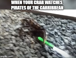 WHEN YOUR CRAB WATCHES PIRATES OF THE CARRIBBEAN | image tagged in dumb,crab,knife,pirates of the carribean | made w/ Imgflip meme maker