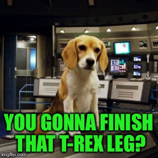 Captain Archer's Beagle Porthos | YOU GONNA FINISH THAT T-REX LEG? | image tagged in captain archer's beagle porthos | made w/ Imgflip meme maker
