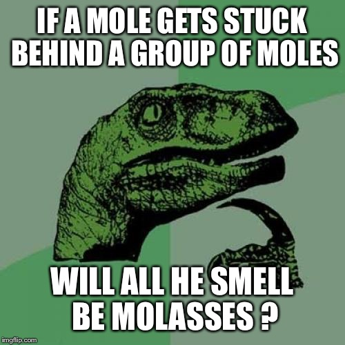 When you live in a tunnel being last is more than just being behind  | IF A MOLE GETS STUCK BEHIND A GROUP OF MOLES WILL ALL HE SMELL BE MOLASSES ? | image tagged in memes,philosoraptor,funny | made w/ Imgflip meme maker