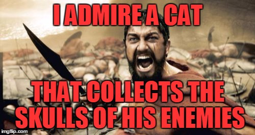 Sparta Leonidas Meme | I ADMIRE A CAT THAT COLLECTS THE SKULLS OF HIS ENEMIES | image tagged in memes,sparta leonidas | made w/ Imgflip meme maker