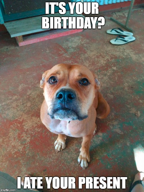 Guilty Birthday | IT'S YOUR BIRTHDAY? I ATE YOUR PRESENT | image tagged in birthday,guilty | made w/ Imgflip meme maker