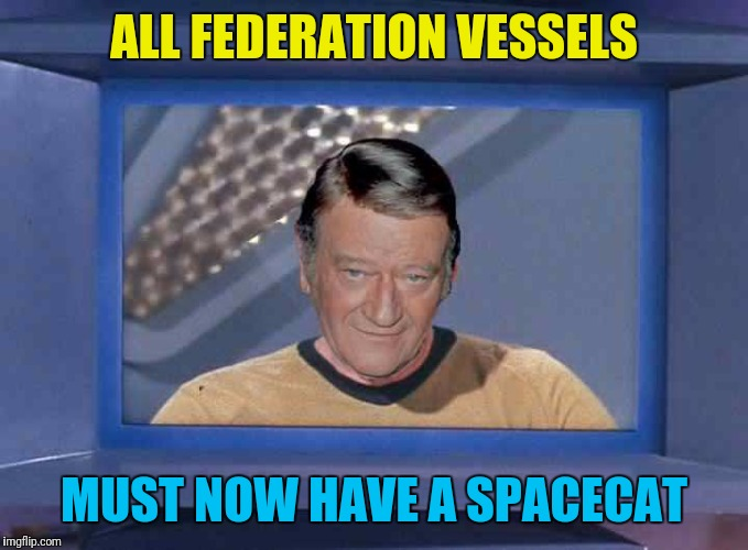 ALL FEDERATION VESSELS MUST NOW HAVE A SPACECAT | made w/ Imgflip meme maker