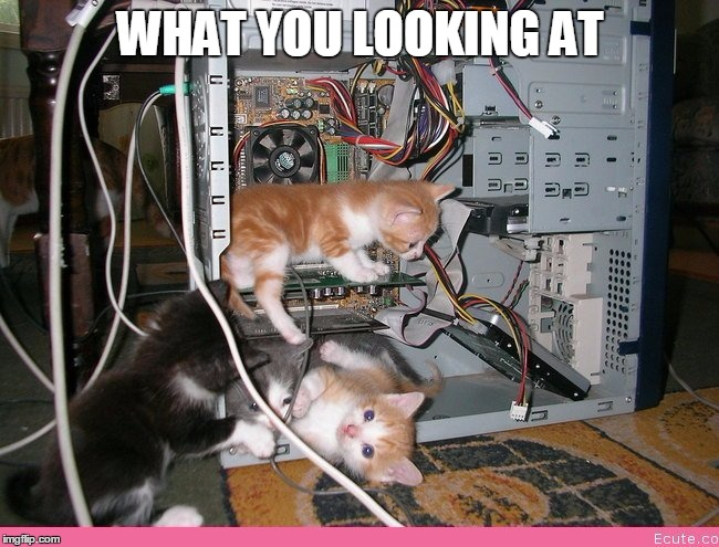 Kittens fixing a computer | WHAT YOU LOOKING AT | image tagged in kittens fixing a computer | made w/ Imgflip meme maker