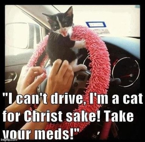 Cats can't drive | image tagged in cats | made w/ Imgflip meme maker
