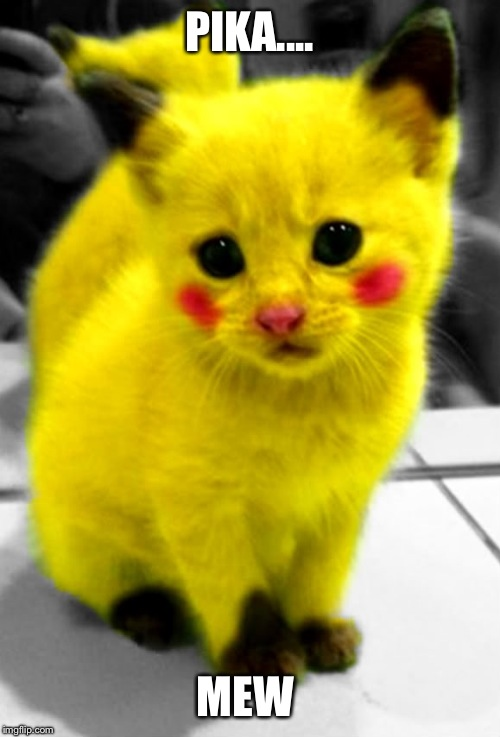 Get it??? | PIKA.... MEW | image tagged in adorable,cute,real life | made w/ Imgflip meme maker