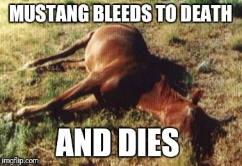 MUSTANG BLEEDS TO DEATH AND DIES | made w/ Imgflip meme maker