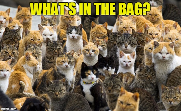 Aoshima cat island | WHAT'S IN THE BAG? | image tagged in aoshima cat island | made w/ Imgflip meme maker