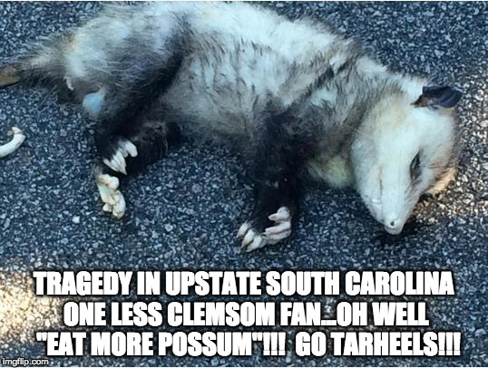 "Possum | TRAGEDY IN UPSTATE SOUTH CAROLINA ONE LESS CLEMSOM FAN...OH WELL  ""EAT MORE POSSUM""!!! GO TARHEELS!!! 