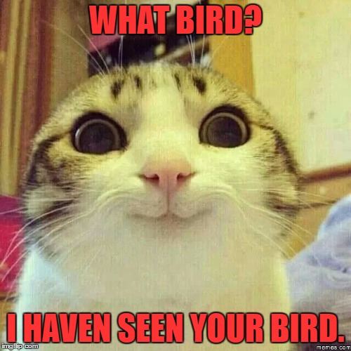 happy kitty | WHAT BIRD? I HAVEN SEEN YOUR BIRD. | image tagged in happy kitty | made w/ Imgflip meme maker