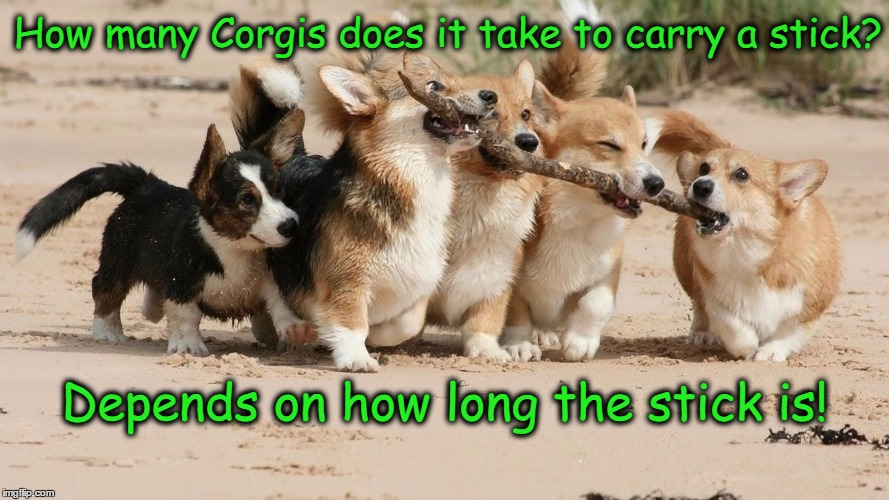 Corgis Play Fetch | How many Corgis does it take to carry a stick? Depends on how long the stick is! | image tagged in corgi,fetch,funny dogs | made w/ Imgflip meme maker