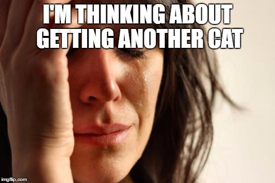 First World Problems Meme | I'M THINKING ABOUT GETTING ANOTHER CAT | image tagged in memes,first world problems | made w/ Imgflip meme maker