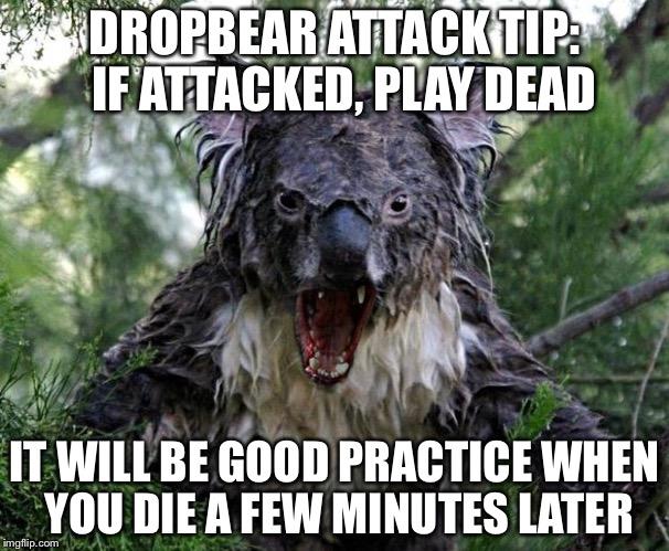 do you play dead with a black bear