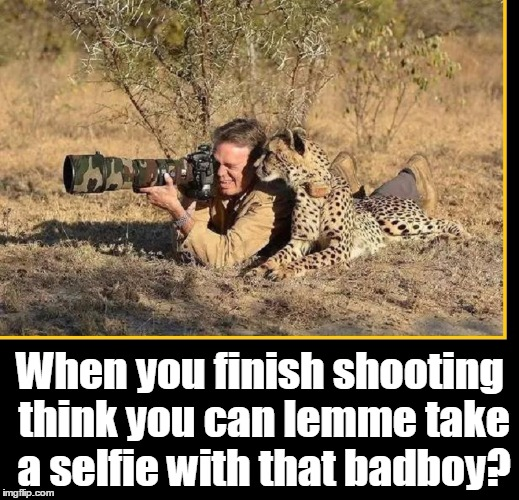 The Whisper of the Wild | When you finish shooting think you can lemme take a selfie with that badboy? | image tagged in cheetah,photographer,wildlife photography,national geographic,camera with camouflage,jungle | made w/ Imgflip meme maker