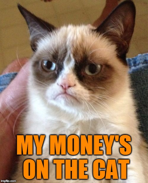 Grumpy Cat Meme | MY MONEY'S ON THE CAT | image tagged in memes,grumpy cat | made w/ Imgflip meme maker