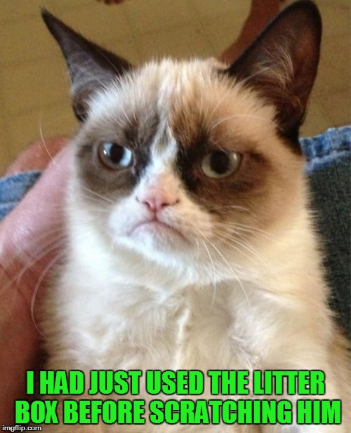Grumpy Cat Meme | I HAD JUST USED THE LITTER BOX BEFORE SCRATCHING HIM | image tagged in memes,grumpy cat | made w/ Imgflip meme maker