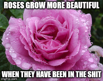hits the fan |  ROSES GROW MORE BEAUTIFUL; WHEN THEY HAVE BEEN IN THE SHIT | image tagged in roses,shit,illness,trouble,useless | made w/ Imgflip meme maker